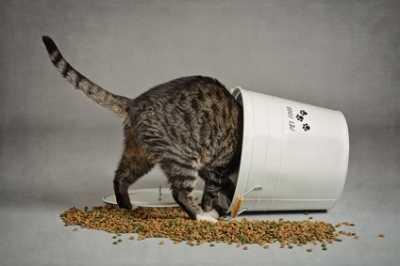 Alimentazione grain free gattina sterilizzata
