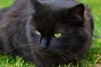 La salute del gatto anziano, alimentazione e cura