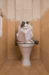 Gatto che non usa la lettiera, come educarlo?