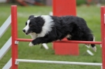 Cambio crocchette per un Border Collie