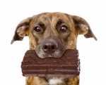 Vietato il cioccolato ai cani e ai gatti, uno degli alimenti più pericolosi