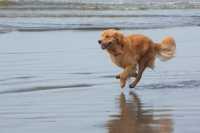 Leishmania del cane, malattia e vaccini
