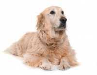 Cane anziano: alimentazione e cura del cane anziano