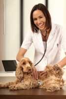 Utilizzo del cortisone per un cane che si gratta