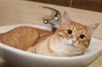 Come spazzolare e lavare il pelo del gatto, come tagliare correttamente le sue unghie