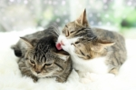 L'alimentazione dei gattini dallo svezzamento ai 12 mesi di età