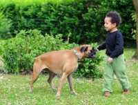 Boxer di 2 anni con notevole calo di peso dopo la sterilizzazione