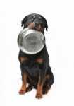Crocchette per cani Prolife con integratori per l'apparato digerente e difese immunitarie