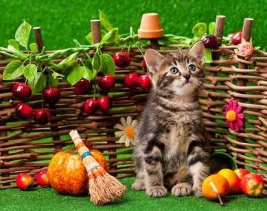 Gli alimenti umidi per gatti Monge Superpremium, ingredienti di qualità integrati con frutta