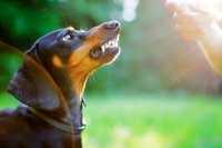 Cure dentali nel cane, esempio pratico