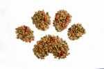 Intolleranza o allergia alimentare nel cane, quali le differenze, come affrontarle
