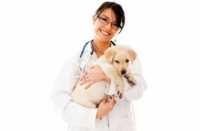 Labrador con problemi cutanei