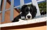 Il cane cucciolo ed i primi vaccini ma quando uscire in sicurezza di casa? Esempio pratico