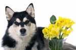 Alimentazione, malattie e cura del cane anziano