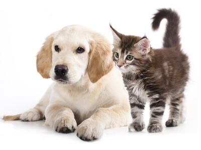 Cane e gatto sotto lo stesso tetto? Come facilitare la convivenza