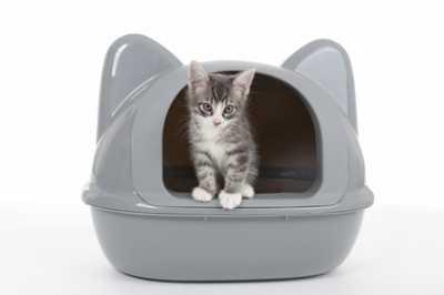 Come educare un gatto: come abituare il gatto alla lettiera