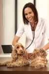 Parassiti intestinali del cane, la Tenia cosa è e come curarla