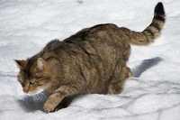 Parassiti del gatto, la Filaria cosa è come curarla