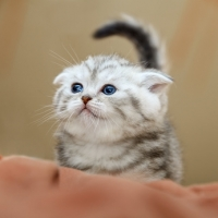 Come rilassare un gatto per affrontare un viaggio