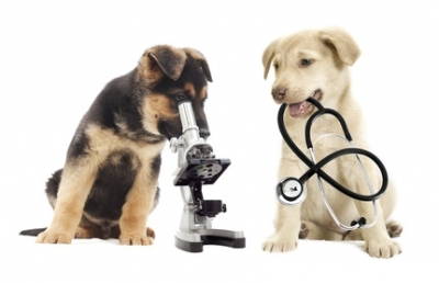 Antiparassitario per un cane cucciolo di 2 mesi