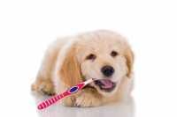 Pulizia denti cane: come lavare i denti al cane e prevenire alitosi, gengiviti e tartaro