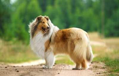 La sensibilità alimentare nel cane, cosa è come si cura
