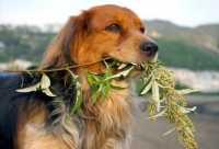 Piante d'appartamento velenose per i cani