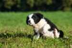Abituare il cane a fare le feci fuori casa, esempio pratico
