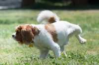 Abituare il cane ad utilizzare la traversina, consigli utili