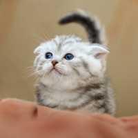 Adottare o lasciare libero un gattino randagio?