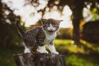 Aggressività gattino, come comportarsi?