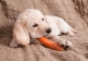Alimentazione mista casalinga ed industriale per due cani meticci
