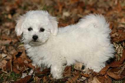 Alimentazione per cagnolina operata di adenocarcinoma mammario