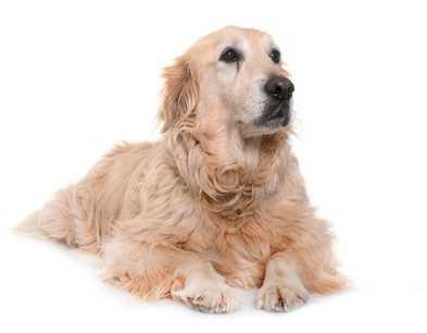 Alimentazione per cane anziano e cucciolo
