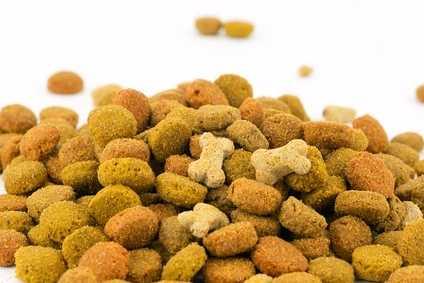 Alimentazione per cane con bilirubina alta
