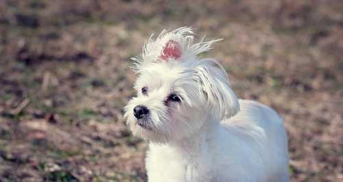 Alimentazione per cane con dermatite da Malassezia