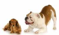 Alimentazione per cani meticci
