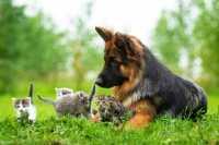 Alimentazione per cucciolo con prurito