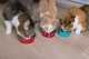 Alimentazione per gatta con problemi urinari