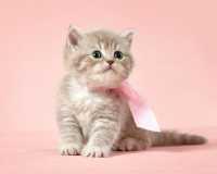 Alimentazione per gattina con diarrea e meteorismo