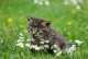 Alimentazione per gatto con calcoli di struvite