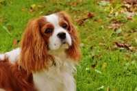 Alimentazione per problema feci morbide cane