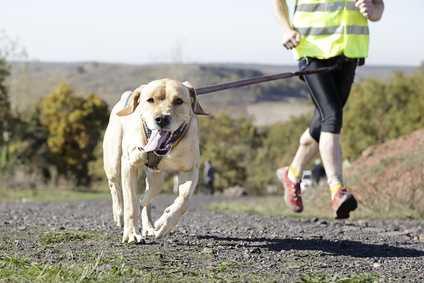 Allergia ed alimentazione del cane, esempio pratico