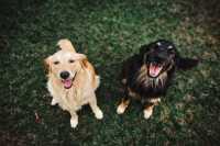 Anemia emolitica immunoereditaria per una cagnolina, cosa fare?