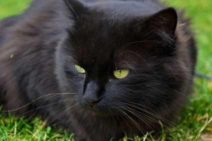 Anemia importante per un gatto, quali esami fare?