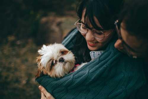 Cane che ha partorito con successivi problemi urinari