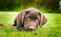Cane che non assimila più cibi umidi
