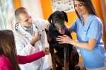 Cane con epilessia e differenza dalle convulsioni