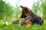 Cane pastore tedesco sotto peso, cosa fare