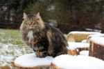Caratteristiche curative delle nuove crocchette per gatti Farmina Quinoa